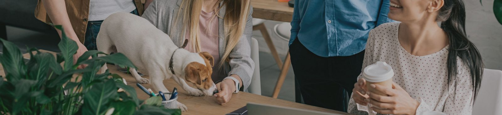 The pros and cons of a pet-friendly office image